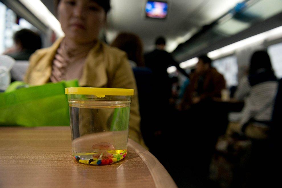 Женщина едет со своей медузой в поезде