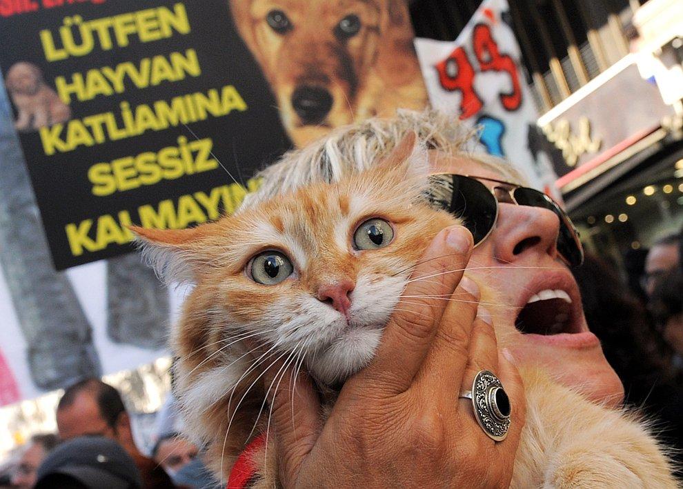20 сентября 2012 в Стамбуле прошел марш за права животных