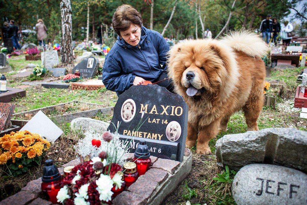 Эта женщина каждый год посещает могилу своих покойных собак, которых звали Gizmo и Maxio