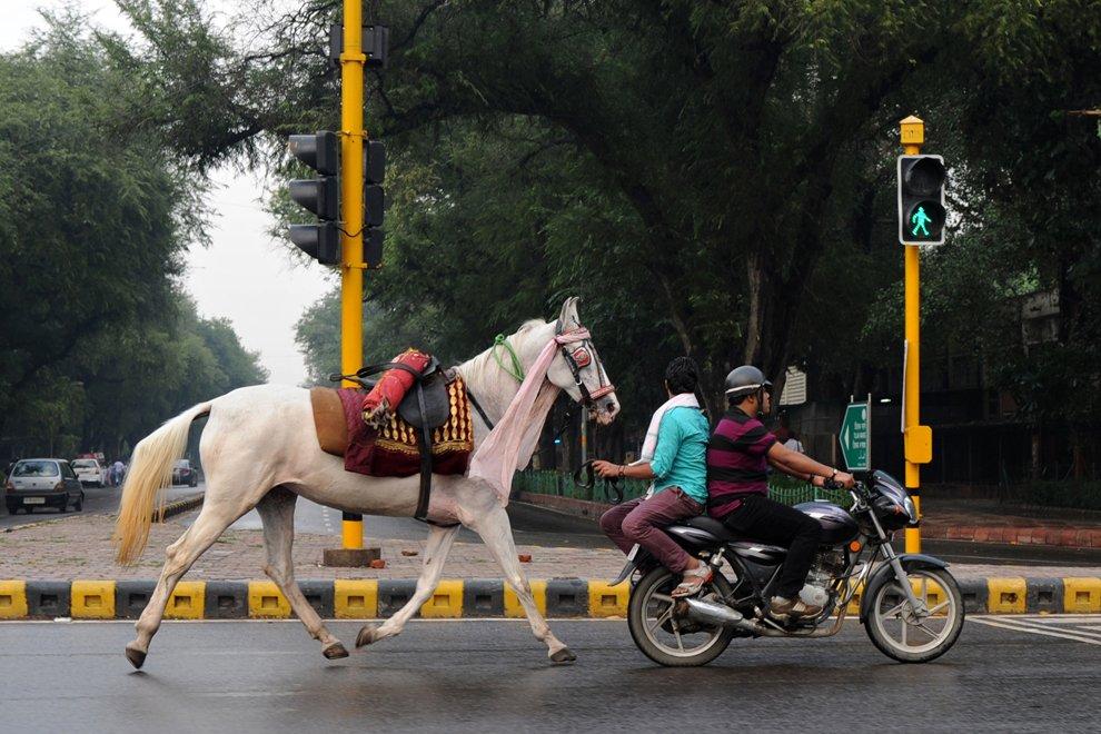 В Индии лошади принимают активное участие в свадебных процессиях