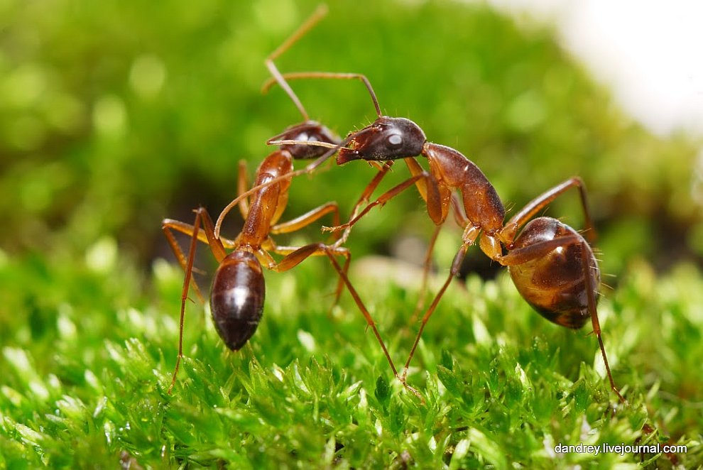 Как построить муравейник