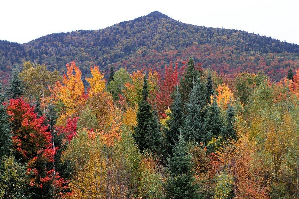 Белые горы — горный хребет, расположенный в США