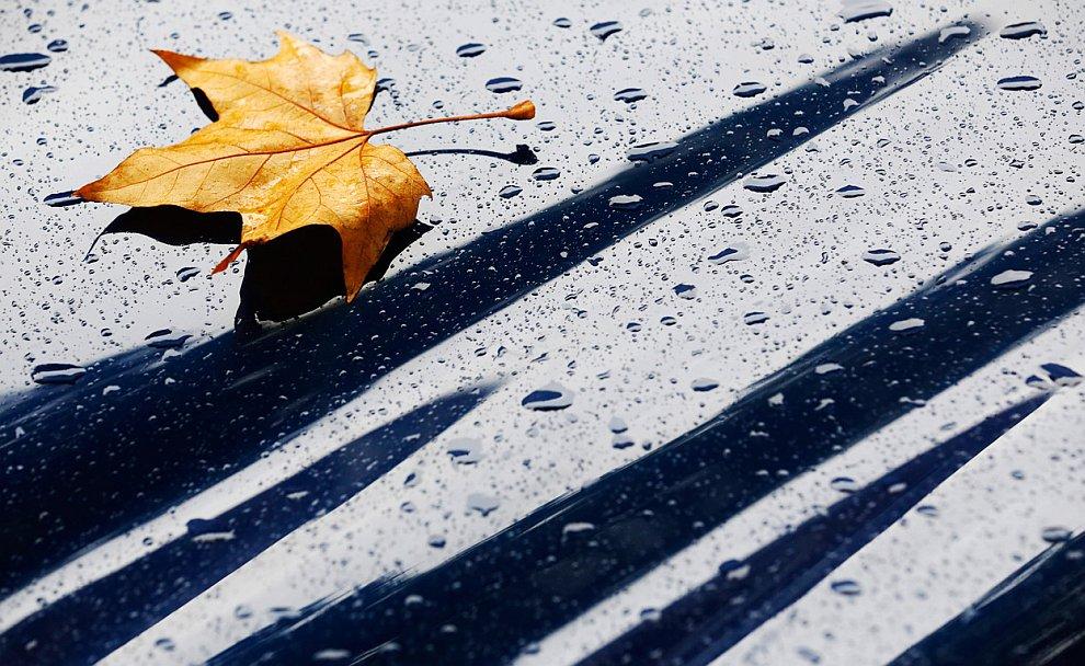 Осенний лист на капоте автомобиля