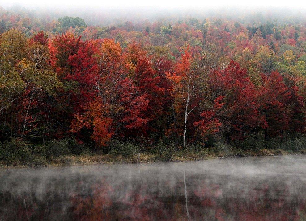 Осенний лес вдоль реки Андроскоггин