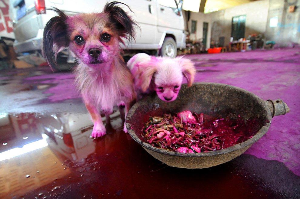 Разноцветные собаки