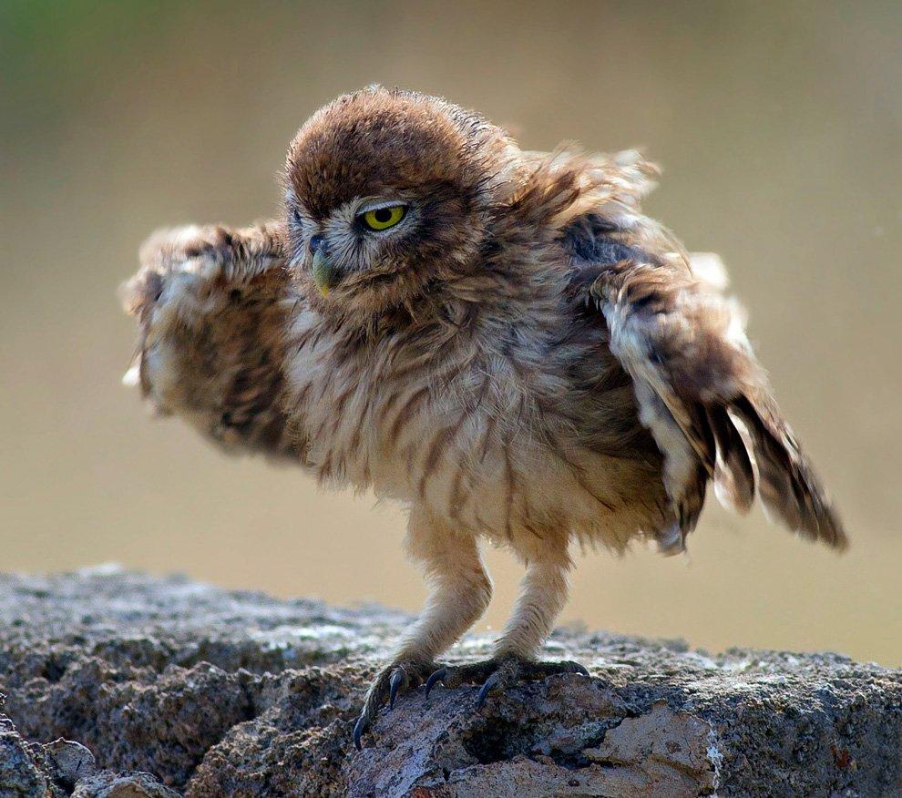 На первом уроке танцев для сов