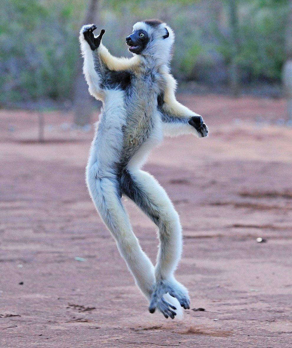 Экстравагантный танцор