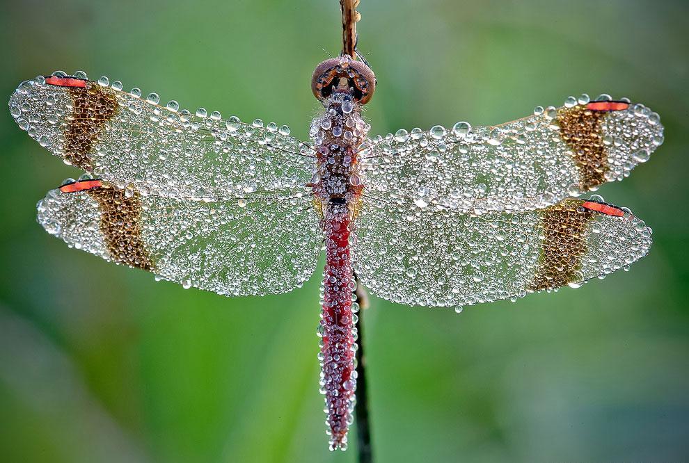 Красивое макро: стрекоза