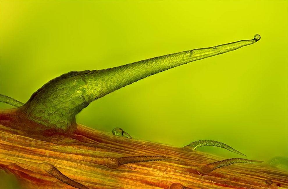 Иголочка на жгучей крапиве