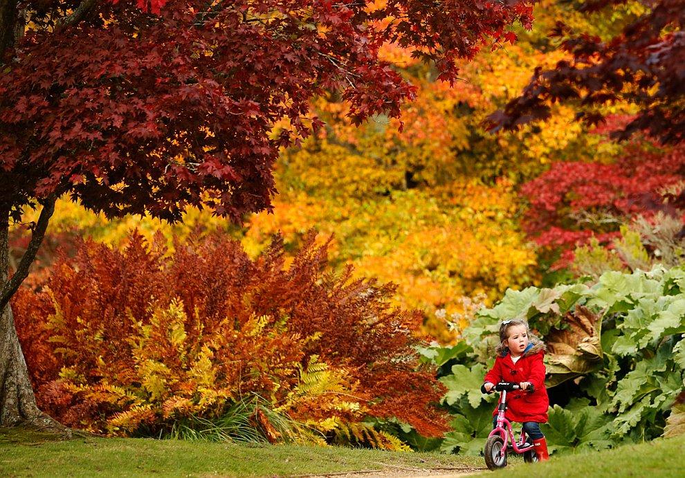 Осень в парке на на юге Англии