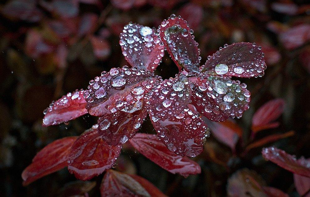 После рекордной засухи, которая длилась с августа, в Северном Ванкувере (Британская Колумбия) начался осенний дождь
