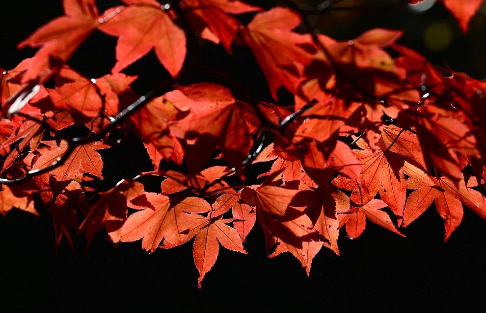 Осенние листья в ландшафтном парке Шеффилд
