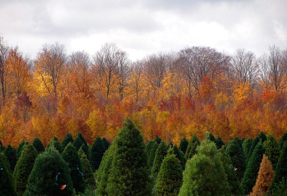 Осень в Северном Мичигана, США