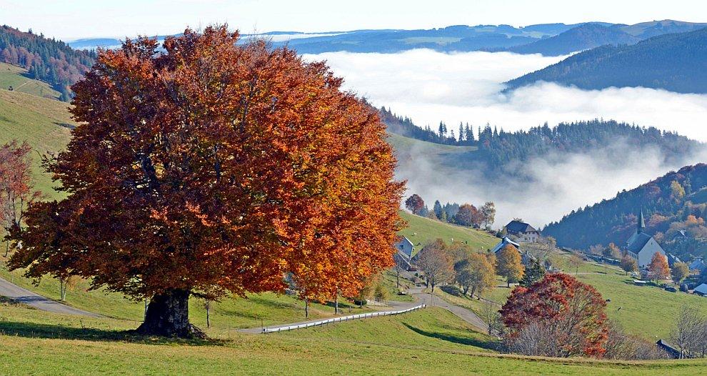 Осенняя долина в Шварцвальде, Германия