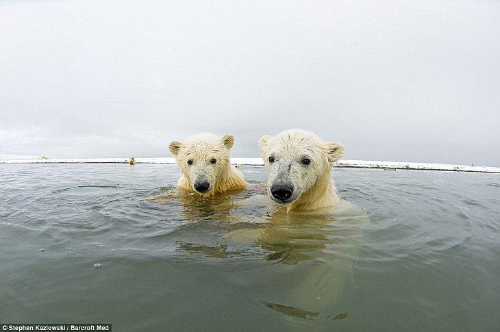 Лицом к лицу с белым медведем
