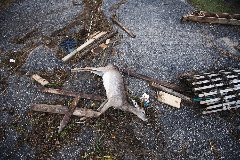 От атлантического урагана Сэнди досталось и животным