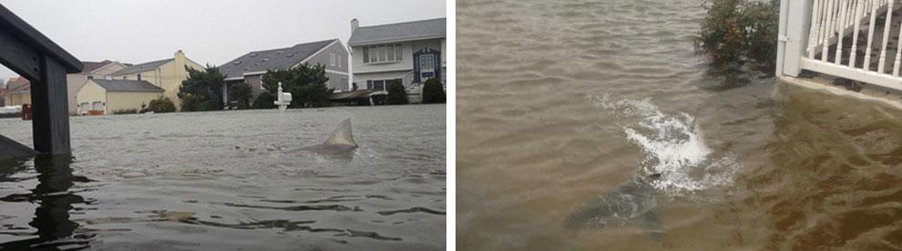 Один из жителей Нью-Джерси выложил в социальные сети фотографии затопленных улиц, на которых видна акула