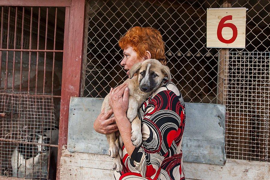 Собачий приют бывшего кинолога