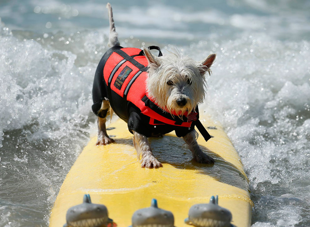 Собачий серфинг