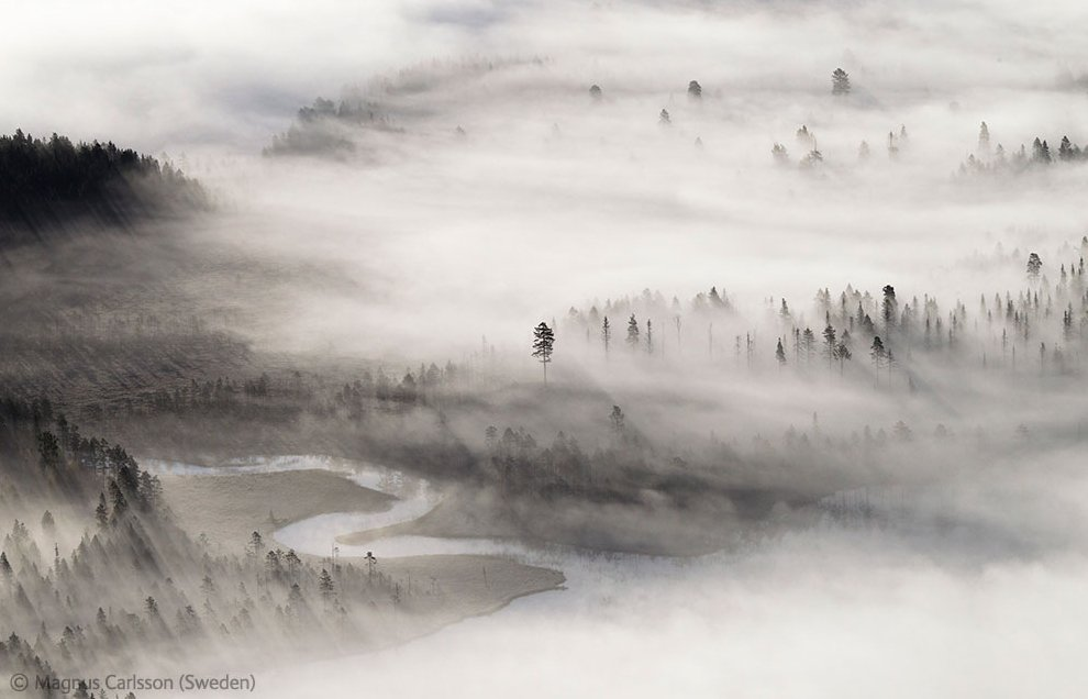 Леса Лапландии на рассвете