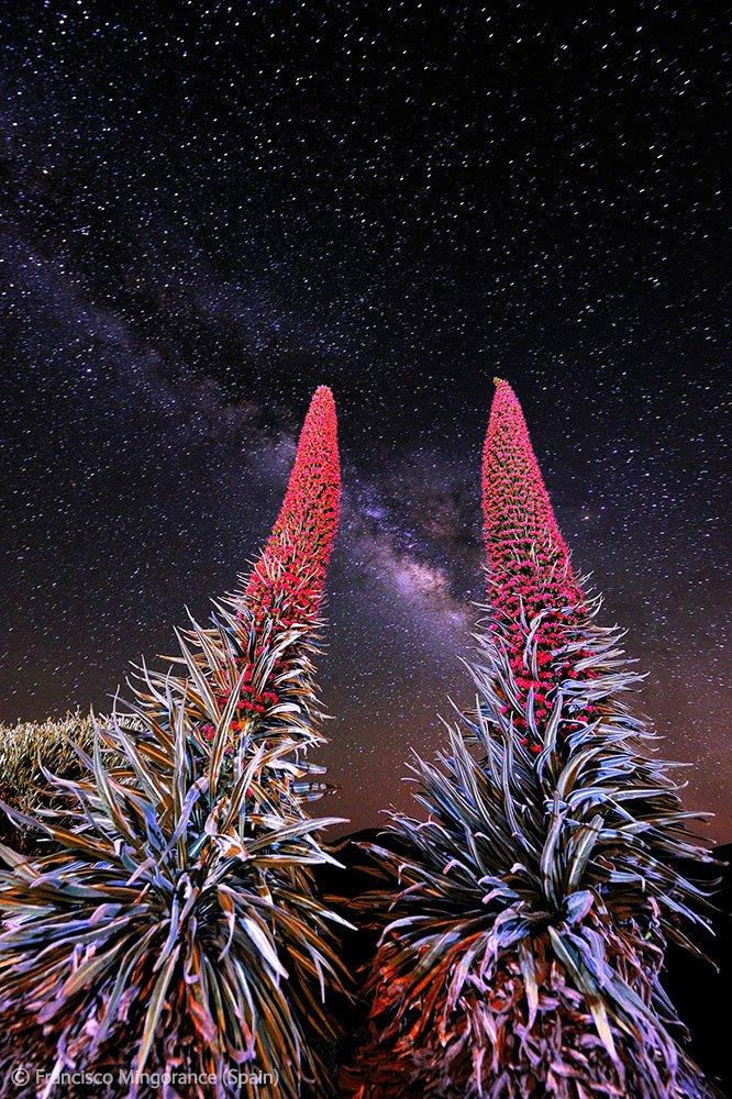 Растение воловик и наша Галактика — Млечный путь