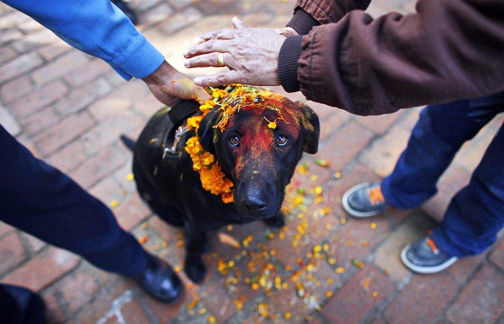 Ритуал с собаками во время фестиваля огней Дивали в Катманду