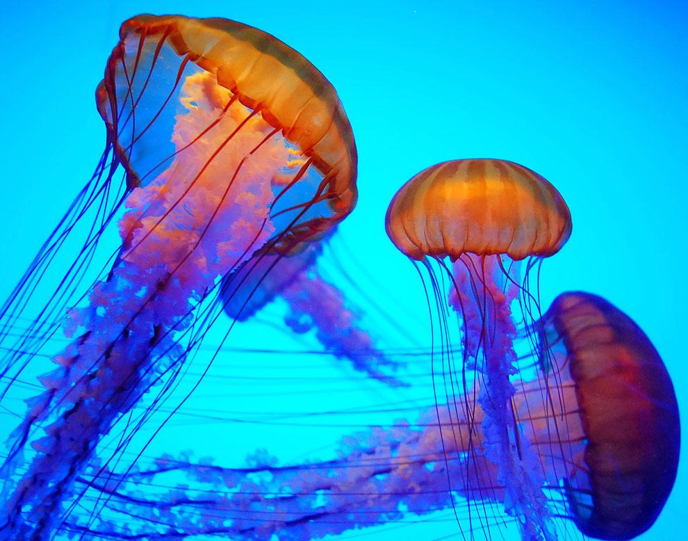 Инопланетные существа: медузы