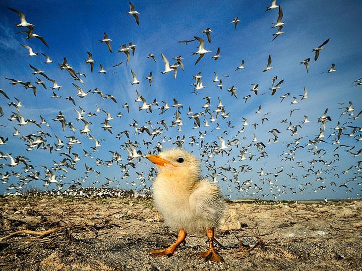 National Geographic: лучшие фотографии октября
