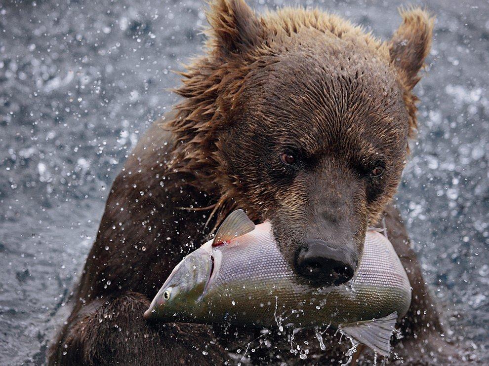 Камчатская рыбалка