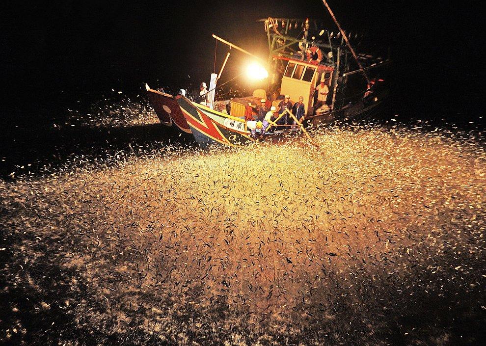 Рыбаки используют огонь, чтобы привлечь рыбу поближе к лодке