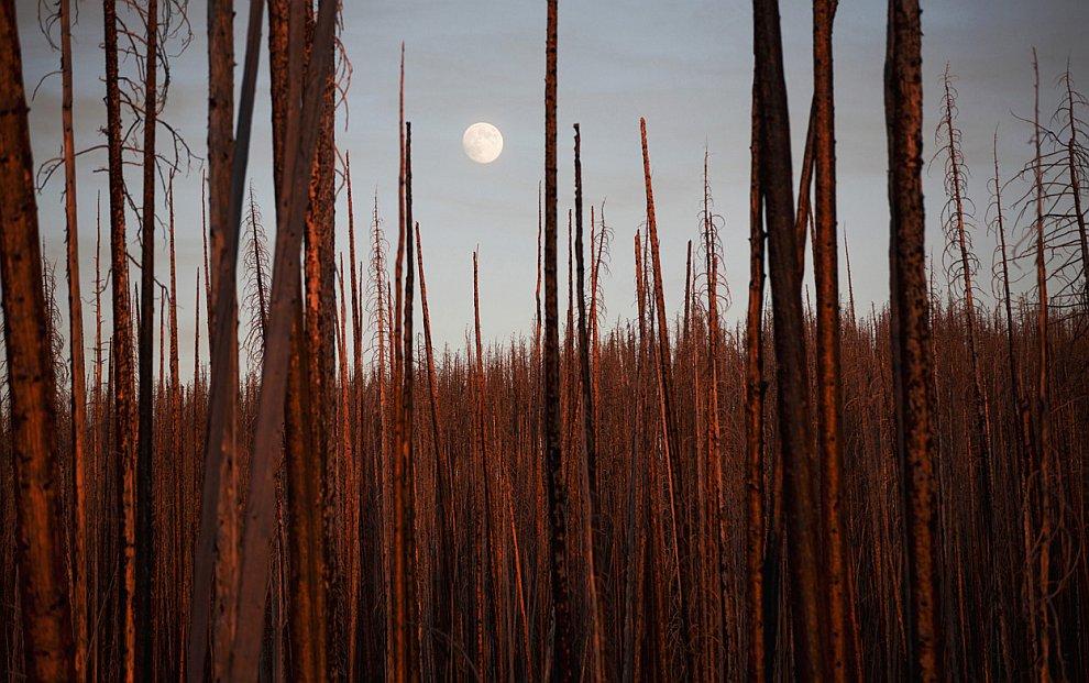 Молчаливый пейзаж после пожара. Снимок был сделан в национальном парке Йеллоустоун