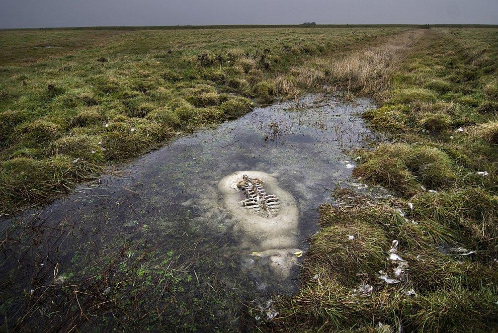 Овца утонула при попытке пересечь небольшой канал