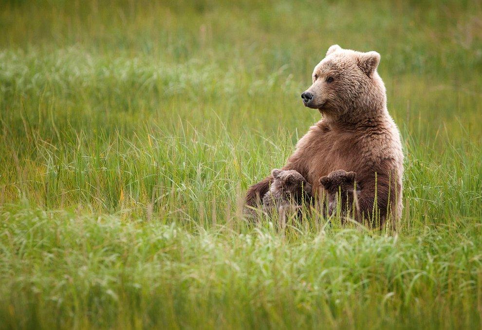 Мама проводит время со своими медвежатами