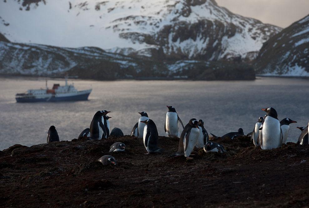 Пингвины в Антарктиде
