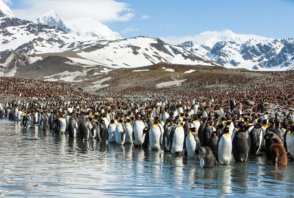 фотографии пингвинов в антарктиде