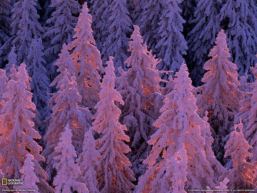 Зимний лес на юго-западе Германии