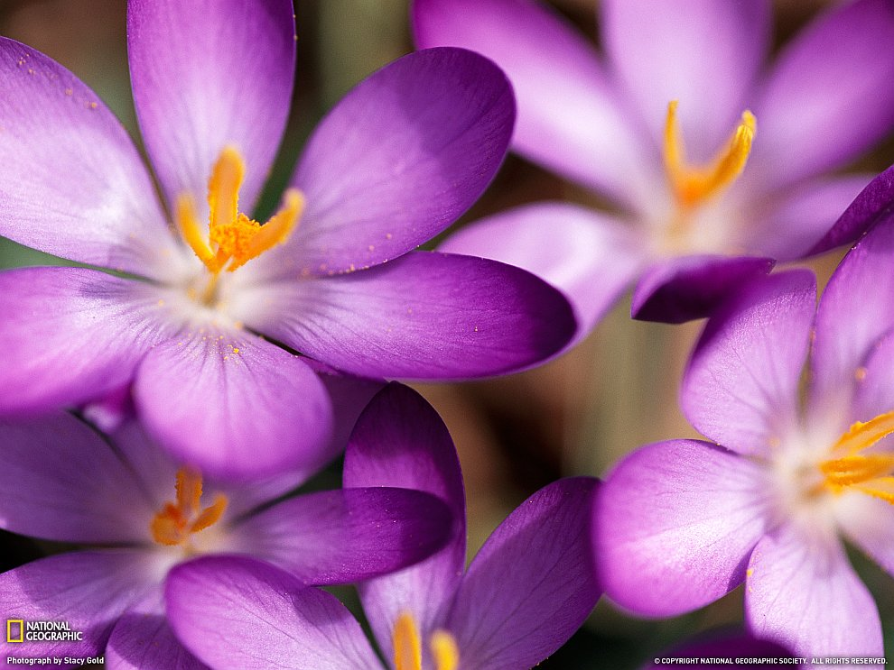 Жизнь в цвете фиолетовый
