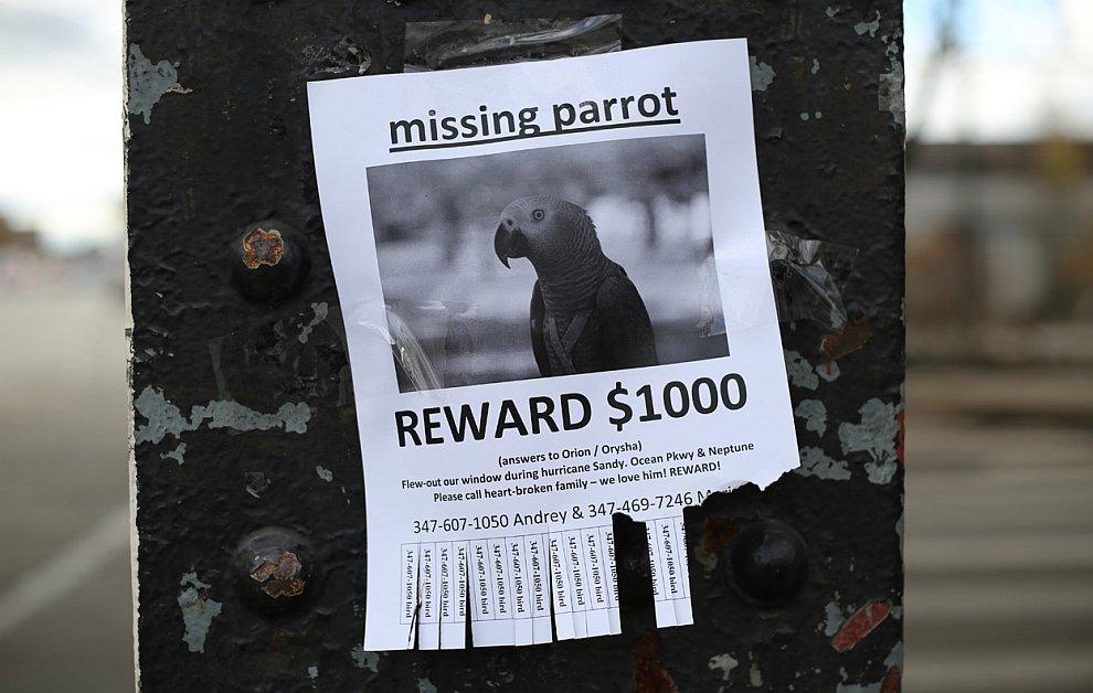 Пропал попугай. Позвоните семье с разбитым сердцем