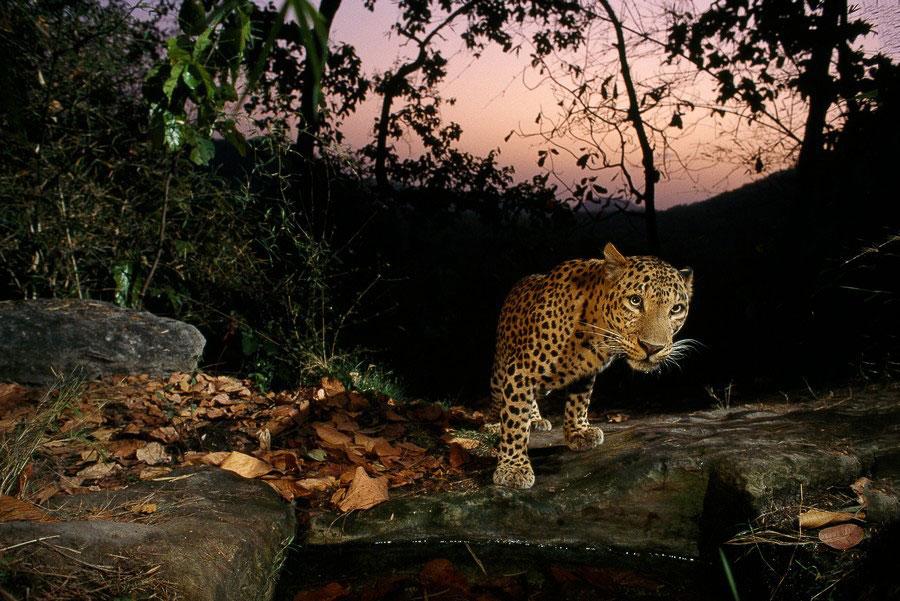 Увидеть тайную жизнь животных
