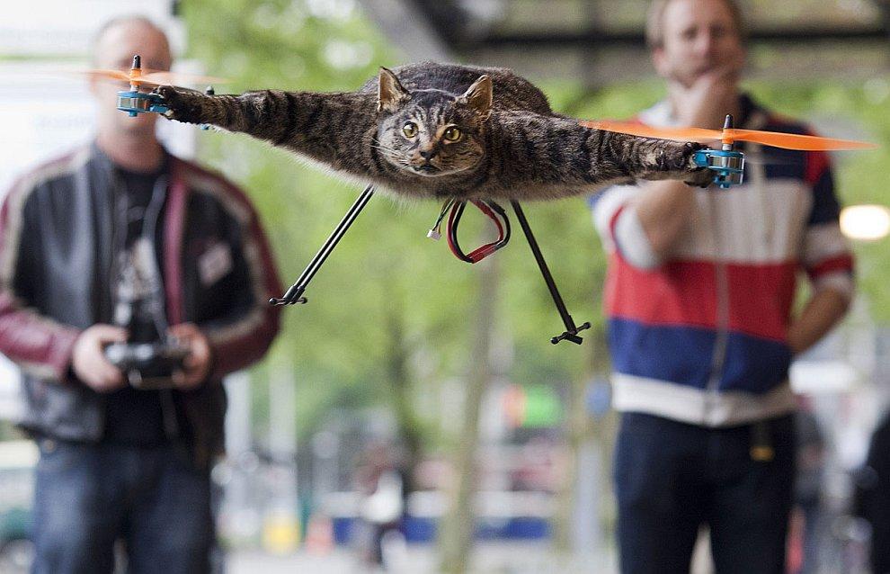 Как сделать из чучела кота