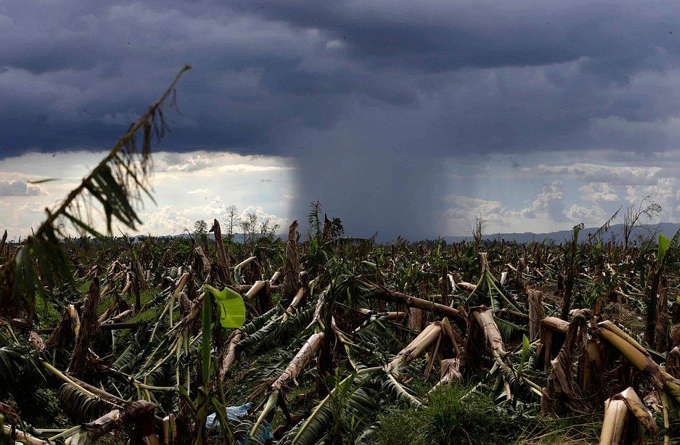 Уничтоженная банановая плантация, Филиппины
