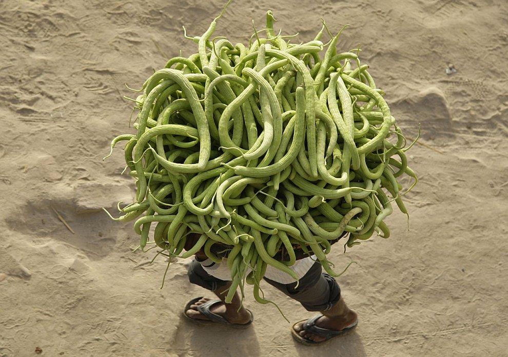 В Индии уродился отличный урожай огурцов