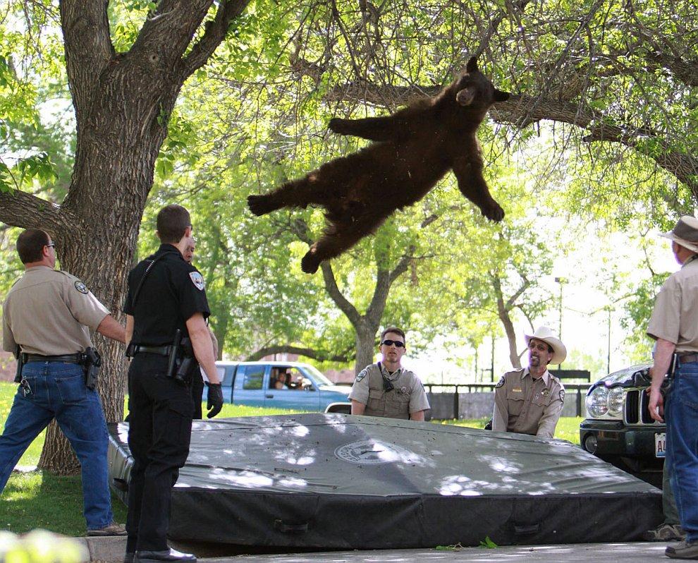 Закончим мы сегодня интересным снимком парящего медведя