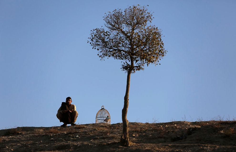 Афганец со своей птицей в клетке в Кабуле