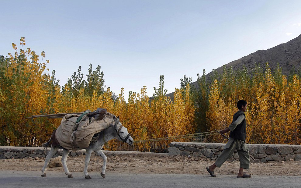 Мальчик с ослом на окраине Кабула