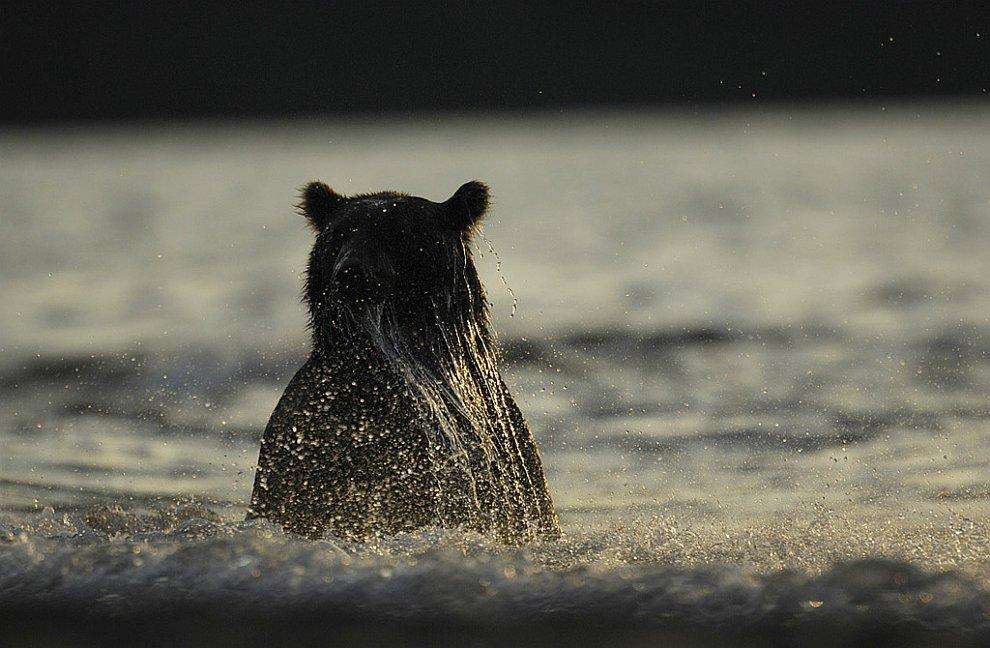Медведи на Камчатке. Часть 3