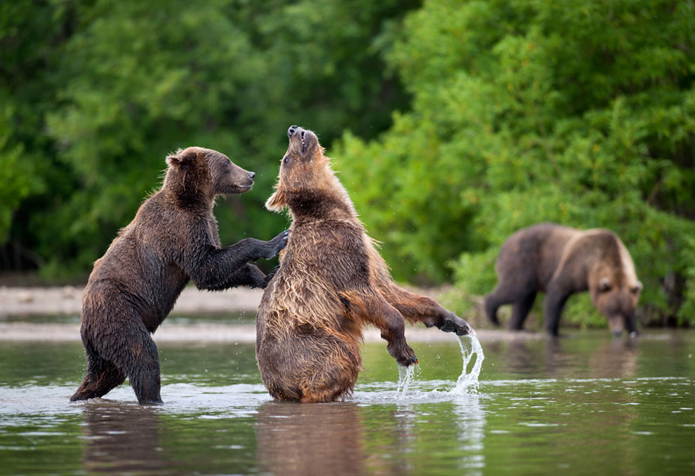 Медведи на камчатке часть 3