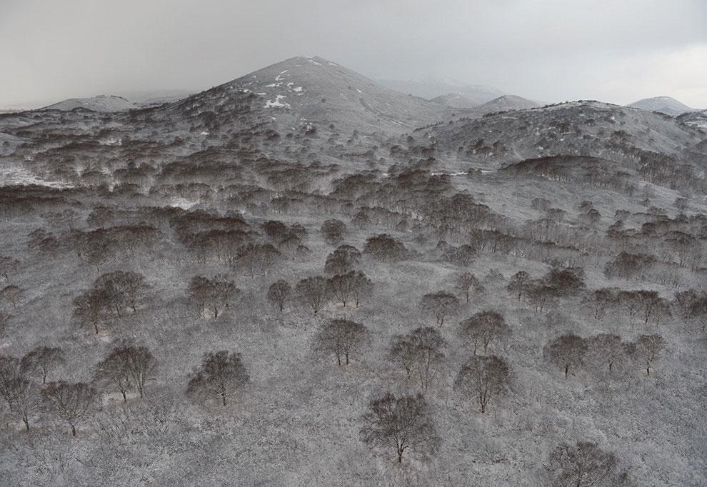 Каменноберезовые леса