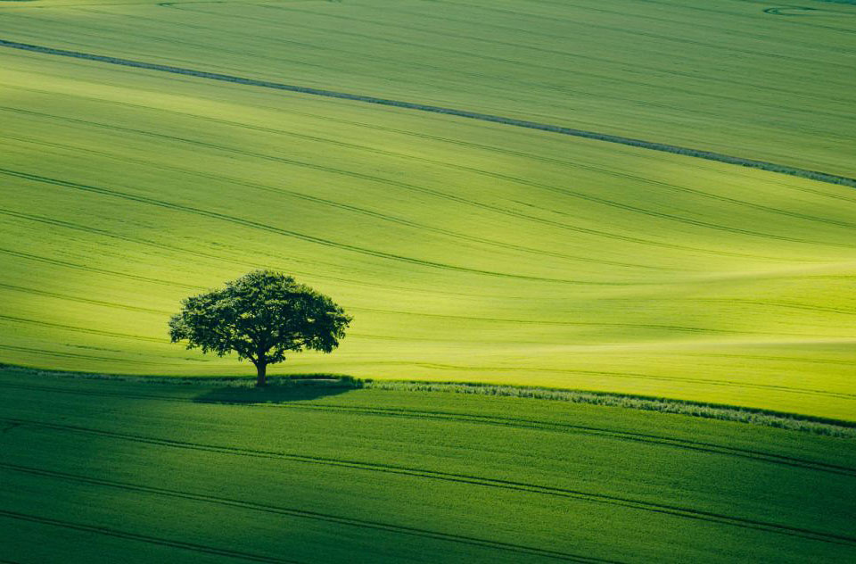 Одинокое дерево в национальном парке South Downs