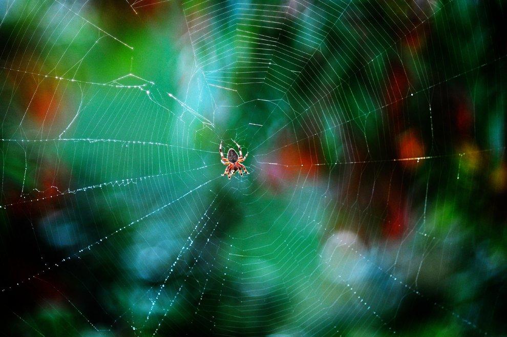 Сети паука, штат Вирджиния